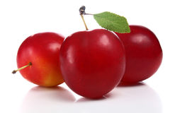 Cherry-plum Stock Images
