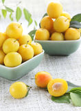 Cherry-plum. Two plates of the yellow damson plum Royalty Free Stock Photos