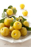 Cherry plum Royalty Free Stock Photos