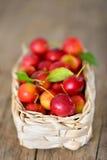 Cherry-plum in basket Stock Image