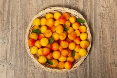 Cherry-plum Royalty Free Stock Images