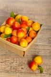 Cherry-plum Stock Images