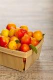 Cherry-plum Royalty Free Stock Image