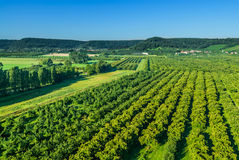 Cherry plum fields of lorraine france Stock Photography