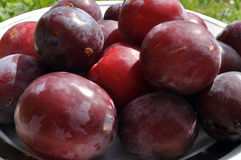 Cherry plum fruit Royalty Free Stock Photos