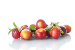 Cherry-plum Stock Image