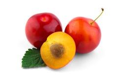 Cherry-plum. On white background royalty free stock image
