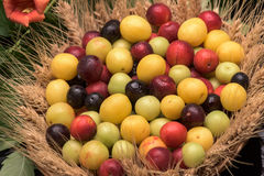 Cherry plums in a wooden basket Stock Photos