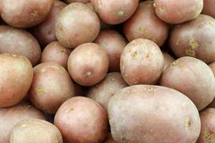 Cherry potatoes (small dutch potatoes) Royalty Free Stock Images