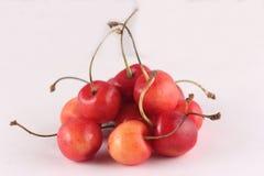Cherry (Prunus avium) Stock Image