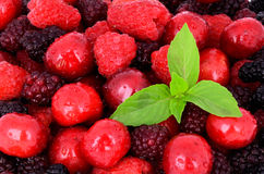 Cherry, raspberry, blackberry on full background_2. Cherry, raspberry, blackberry on full background close-up, decorated with green leaves Royalty Free Stock Photo