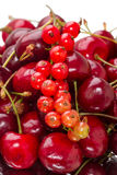 Cherry and red currant Royalty Free Stock Image
