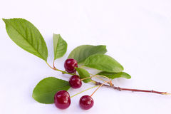 Cherry. Ripe cherries in the orchard, photography Stock Images