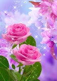 Cherry and roses blossom Stock Image