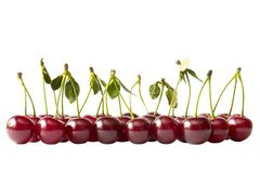 Cherry row (path isolated). Cherry row extreme close-up shot isolated over white background (path isolated Royalty Free Stock Photos