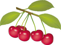 Cherry`s. Object on a white background Stock Photos