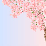 Cherry sakura blossoms Spring  place for text vector Stock Photography