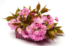Cherry sakura in paper box Royalty Free Stock Photos