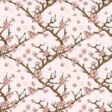 Cherry or sakura seamless pattern background Royalty Free Stock Images