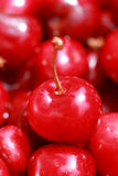 Cherry selection Stock Photography