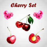 Cherry set Stock Images