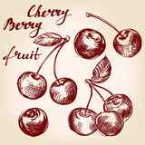 Cherry set hand drawn vector illustration sketch Stock Images