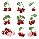 Cherry set. Vector Stock Photography