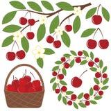 Cherry Set Stock Photography