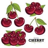 Cherry Set, vettore Fotografia Stock Libera da Diritti