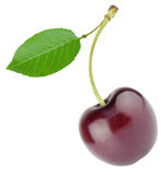 Cherry with sheet Royalty Free Stock Photography
