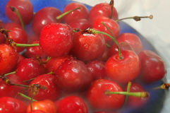 Cherry shower. Bowl with red cherries under the shower of water Stock Photo