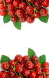 Cherry Side Borders with central Copy Space Stock Photo