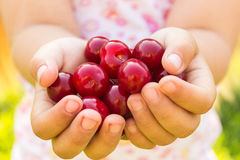 Cherry in the small childish palms. Ripe cherries torn in small children's hands, summer day, close-up Stock Photography