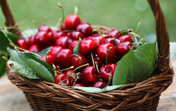 Cherry. Some beautiful sweet cherry fruit in basket Stock Image