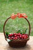 Cherry. Some beautiful sweet cherry fruit in basket royalty free stock photo