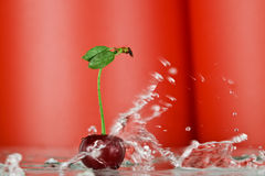 Cherry splash Stock Photos