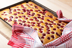 Cherry sponge cake Royalty Free Stock Photography