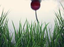 Cherry Spoon Reflection Imágenes de archivo libres de regalías