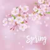 Cherry Spring Background Stock Photos