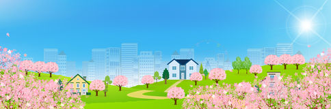 Cherry spring flower background. Illustration background of beautiful scenery Royalty Free Stock Photo