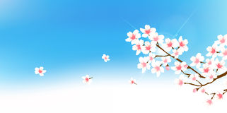 Cherry spring flower background Royalty Free Stock Photo