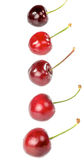 Cherry straight line Stock Photography