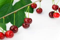 Cherry sura Cherry Arkivfoton