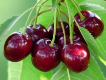 Cherry, Sweet Cherry, Red, Fruit Royalty Free Stock Images