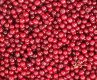 Cherry texture Stock Photo