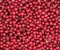Cherry texture Stock Photo