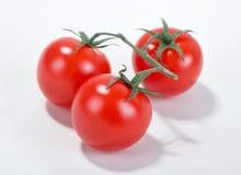 Free Cherry Tomato Stock Photography - 13342962