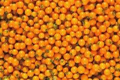 Cherry tomato. Stock Images