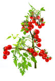 Cherry tomato Stock Photos