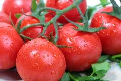 Cherry tomato Stock Photography
